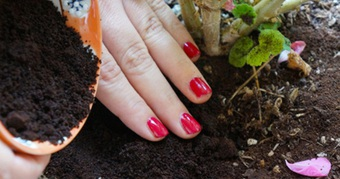 Người trồng rau tại nhà mách nhau bí kíp trị ốc sên hiệu quả
