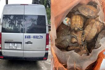 Phát hiện 34 cá thể rùa đi 'du lịch' bằng xe 16 chỗ
