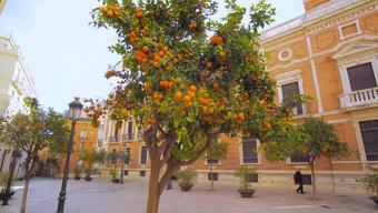 Ấn tượng với chiếc máy rung vài giây, cả cây cam rụng sạch