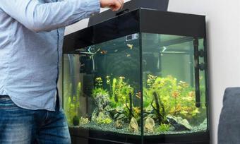 4 điểm cần chú ý khi đặt bể cá tại nhà để sinh phú quý và mang lại may mắn