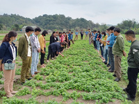 Lạng Sơn tập huấn cho nông dân quản lý và duy trì mã số vùng trồng thạch đen