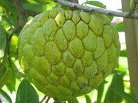 Năm loại trái cây không hạt ''làm mưa làm gió'' trên thị trường
