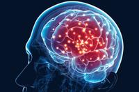Tập thể dục thường xuyên não sẽ trẻ mãi không già, 5 gợi ý giúp não bộ thông minh hơn