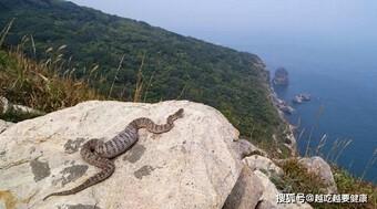Rợn người với hòn đảo có gần 20,000 con rắn độc trong 1km2