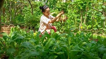 """""""Bỏ phố về quê"""", cặp vợ chồng Bến Tre làm khu vườn 500m2 tràn ngập rau trái"""