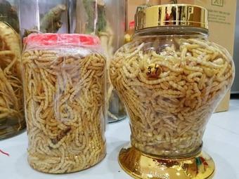 Loại sâu ở Việt Nam ví như đông trùng hạ thảo, giá đắt nhưng không thiếu người mua