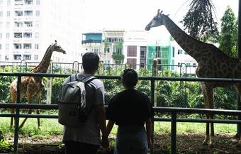 Thảo Cầm Viên Sài Gòn gặp khó: Nhiều người góp sức mong thú không bị đói