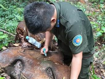 Làm rõ trách nhiệm để xảy ra khai thác rừng trái phép tại Rừng A Lưới