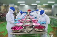 Việt Nam xuất siêu 15 tỷ USD sang thị trường EU