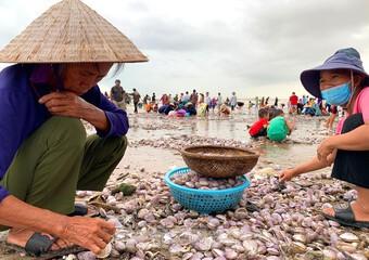 Sóng đưa ''lộc'' vào bờ, người dân đổ xô đi nhặt kiếm bạc triệu chỉ trong vài giờ
