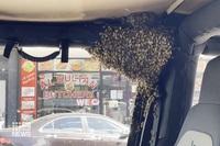 """Đàn ong """"tập kết"""" đầy ô tô chỉ sau ít phút người đàn ông rời khỏi xe"""