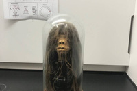 Chiếc đầu rùng rợn được dùng làm đạo cụ trong hàng loạt bộ phim hoá ra là… đầu người thật và phát hiện đầy bất ngờ của giới khoa học