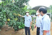 Hà Tĩnh có trang trại bưởi đầu tiên đạt chứng nhận GlobalGAP