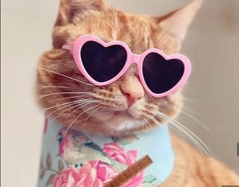 Gặp gỡ mèo vương giả, ngôi sao mạng xã hội với cuộc sống sang chảnh