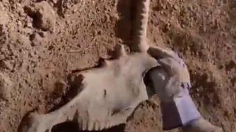 Đào đất trong vườn, anh chàng ngỡ ngàng khi tìm thấy dấu tích của sinh vật tưởng chỉ có trong truyền thuyết