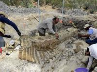 Hóa thạch khủng long với cấu trúc gai kỳ dị khiến giới khảo cổ kinh ngạc