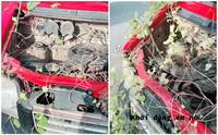 Chủ xe 'giận tím người' khi cây mọc kín ôtô