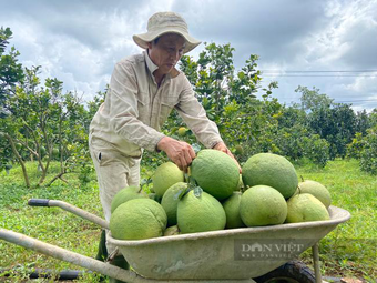 """Đồng Nai: Thành """"vùng xanh"""", nông dân nơi này thoải mái bán củ đậu, bưởi, dê, cá"""