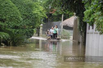 Nghệ An: Nước lũ đã rút nhưng nông dân trắng tay vì điều này