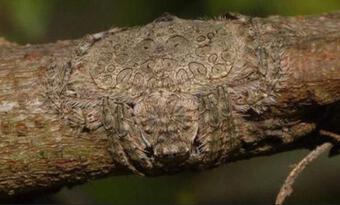 Vô tình chạm tay vào cành cây lông lá, người đàn ông phát ốm khi biết hóa ra đó là vật sống