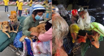 Vụ 15 chú chó bị tiêu hủy: Chủ tịch UBND huyện tiết lộ nguyên nhân chi tiết