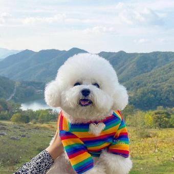 Ham Arang - chú chó bất ngờ nổi tiếng khắp thế giới vì nụ cười ''thảo mai'' và thân hình mũm mĩm ú nu