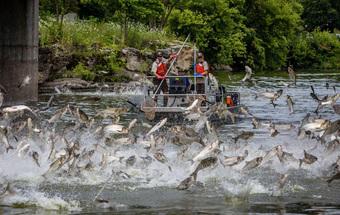 Con thuyền vừa đi tới, hàng trăm con cá bỗng đồng loạt nhảy lên khỏi mặt nước: Kết quả vớt không xuể!