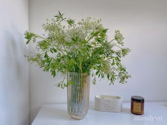 Chị em lại nô nức mua loại hoa cà rốt về cắm cho mới lạ nhà, 70.000 đồng/bó mà đặt góc nào cũng nghệ thuật