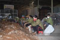 Quảng Bình: Trồng nấm la liệt trong nhà, một nông dân lãi hàng trăm triệu