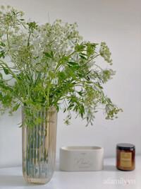 Mới, lạ hoa cà rốt, thu hút nhiều bà nội trợ yêu hoa mua về cắm