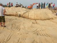 Xác cá voi nặng 4 tấn trôi dạt vào bờ biển Quảng Nam