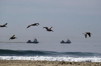 Câu chuyện phía sau thảm họa tràn dầu ở California, Mỹ