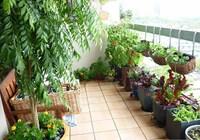 3 loại cây đẹp nhưng không nên trồng ở ban công, mua về lá vàng, rễ thối sau vài tuần