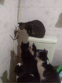 Chuột thương lượng với đàn mèo