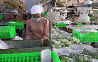 Tăng tốc xuất khẩu nông sản