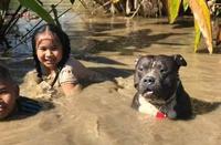 Chó cưng buồn khi tắm bùn cùng chủ