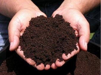 """Lý do phân trùn quế là lựa chọn số một của những """"nhà nông sân thượng"""""""