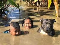 Chó cưng thích thú tắm bùn