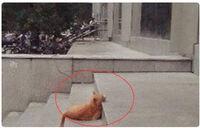 Bức ảnh đầu mèo nằm trơ trọi giữa đường khiến dân mạng dậy sóng: Cẩn thận bị lừa!