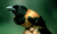 Chú chim nhỏ phát ra mùi lạ - Tuyệt đối không chạm tay vào!