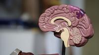 Các nhà khoa học sử dụng cấy ghép não để chữa bệnh trầm cảm nặng ở phụ nữ