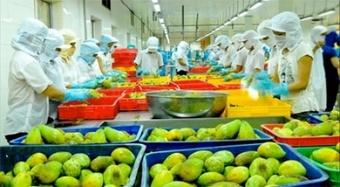 Tiềm năng lớn xuất khẩu rau quả sang EU