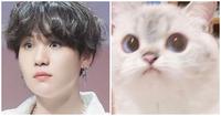Phải có lý do rõ ràng tại sao ARMY lại gọi Suga BTS là ''Lil Meow Meow''