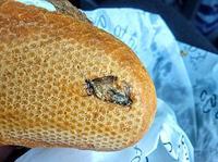 Ăn gần hết chiếc bánh, cơn ói trào lên vì phát hiện 'tiểu cường'